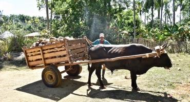 4.-Agroecología-•-Parque-Humboldt-•-Baracoa-Cuba